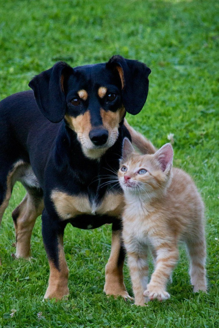what does elevated liver enzymes mean in dogs